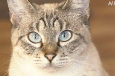 NHK BSプレミアム2月12日(金)午後7:30~午後8:00【美の壺】「魅惑の相棒 猫」に出演します!